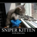 sniper_kitten_by_lookingxglassxchica-d3d5yjp